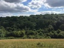 Forest View Fotografía de archivo libre de regalías