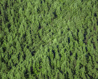 Forest view from above Royalty Free Stock Photography