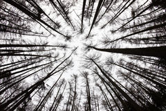 Forest View From Below Royalty-vrije Stock Foto's