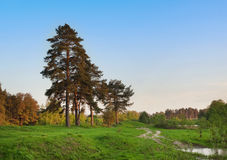 Forest view with blue sky and green meadow Royalty Free Stock Image