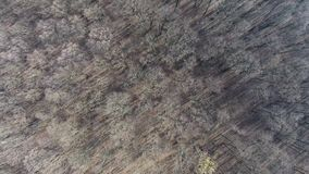 Forest view from drone, autumn time stock video