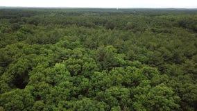 Forest View du bourdon 4K Boston Etats-Unis banque de vidéos