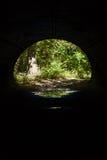 Forest View durch Tunnel Stockbild