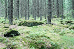 Forest. Royalty Free Stock Images