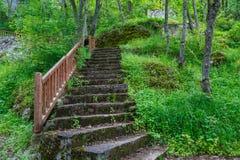 Forest View intenso Fotografia de Stock