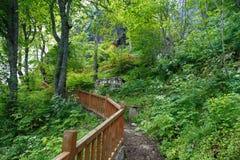 Forest View intenso Fotos de Stock