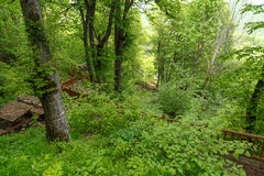 Forest View intenso Imagem de Stock Royalty Free