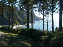 Forest View. A look thru the trees at the cliffs on the central Oregon coast stock photos