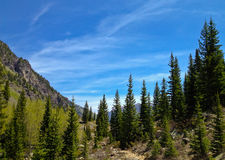 Forest view in Maroon Bells Stock Photography