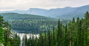 Forest view. Forest mountain landscape in Lapland Finland Royalty Free Stock Photo