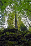Forest view. A sunny day in green forest stock photography