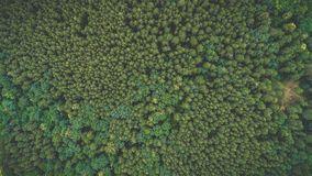 Forest view from top up stock photography