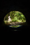 Forest View through Tunnel Stock Image