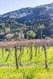 Forest and vineyard in Gramado. Rio Grande do Sul, Brazil Royalty Free Stock Images