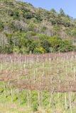 Forest and vineyard in Gramado. Rio Grande do Sul, Brazil Stock Photos