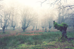 Forest with vintage effect filter Royalty Free Stock Images