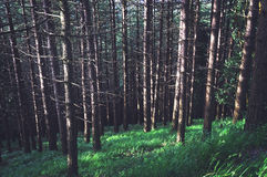 Forest with vintage effect Stock Image