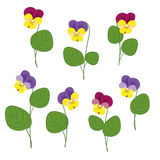Forest Violets On White Background. Spring forest violets with green leaves on a white background. Isolated objects Royalty Free Stock Photo