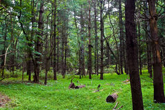 Forest in Virginia stock photo