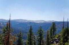 Forest Vista Imagen de archivo libre de regalías