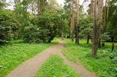 Forest walk. Have a walk in our wonderful forest, two roads Royalty Free Stock Photo