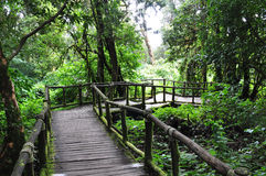 Forest walk. A pathway in the tropical forest Royalty Free Stock Image