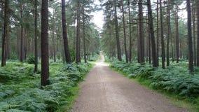 Forest Walk stock afbeeldingen