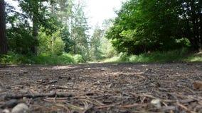 Forest Walk Fotografie Stock