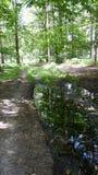 Forest Walk Photographie stock libre de droits