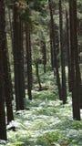 Forest Walk immagini stock libere da diritti