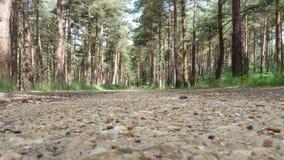 Forest Walk Lizenzfreies Stockbild