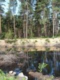 Forest Walk fotografie stock libere da diritti