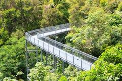 Forest Walk da floresta úmida do parque do monte de Telok Blangah Imagens de Stock