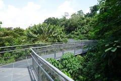 Forest Walk da floresta úmida do parque do monte de Telok Blangah, Singapura Fotos de Stock Royalty Free