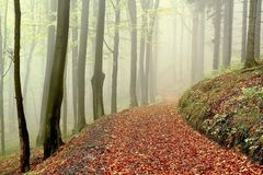 Forest walk in the fog at the end of autumn. Mystic forest track in the mountains through the beech trees at the end of fall season Stock Photography