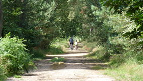 Forest walk Stock Photos