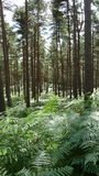 Forest walk Stock Photography