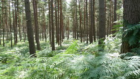 Forest walk Royalty Free Stock Photography