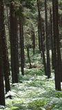 Forest walk Royalty Free Stock Images
