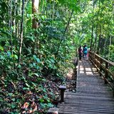 Forest walk - Singapore Royalty Free Stock Images