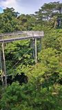 Forest walk, Singapore. Steel suspension bridge serves as canopy walkway in Alexandra, Singapore Royalty Free Stock Photos