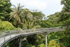 Forest Walk of Telok Blangah Hill Park rainforest Stock Photography