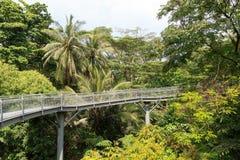 Forest Walk of Telok Blangah Hill Park rainforest Stock Photos