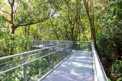 Forest Walk of Telok Blangah Hill Park rainforest Royalty Free Stock Photography