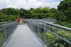 Forest Walk of Telok Blangah Hill Park rainforest, Singapore Stock Photo