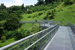 Forest Walk of Telok Blangah Hill Park rainforest, Singapore Royalty Free Stock Photos