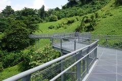 Forest Walk of Telok Blangah Hill Park rainforest, Singapore Stock Images