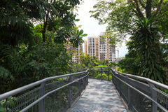Forest Walk of Telok Blangah Hill Park rainforest and skyscrapers Royalty Free Stock Images