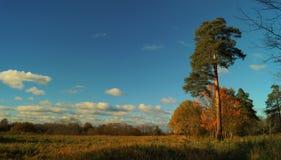 Forest_002 royaltyfri foto