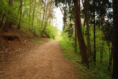 Forest walking Royalty Free Stock Image